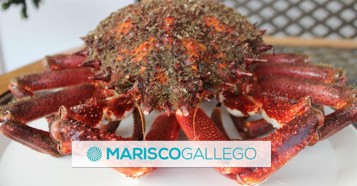 Mariscada Gallega · Lotes con marisco