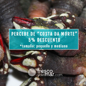 Percebe de Costa da Morte