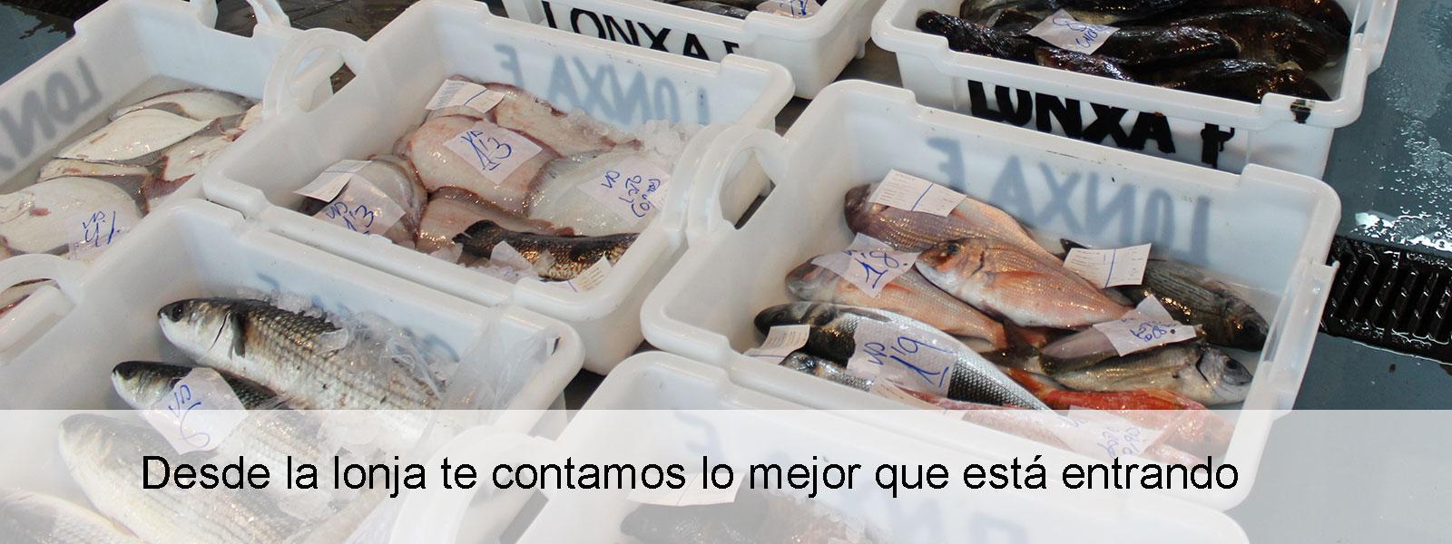 Pescado para ti, compra desde la lonja
