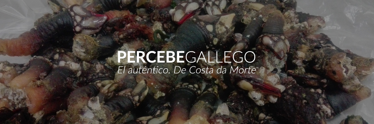 Percebes de Costa da Morte