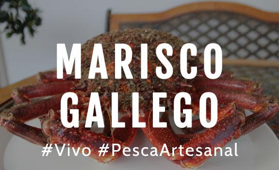 Comprar Marisco Gallego Online