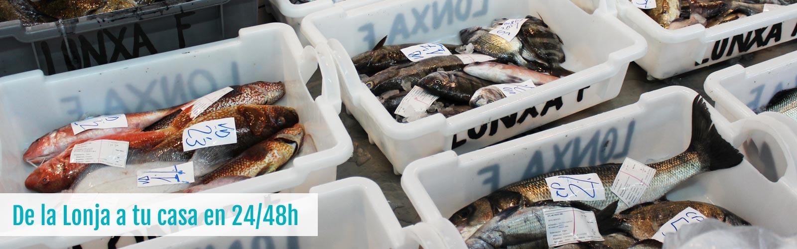 Marisco y pescado fresco gallego
